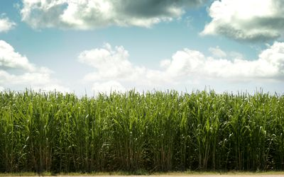 About Sugarcane, Co-generation (.. and beyond?)