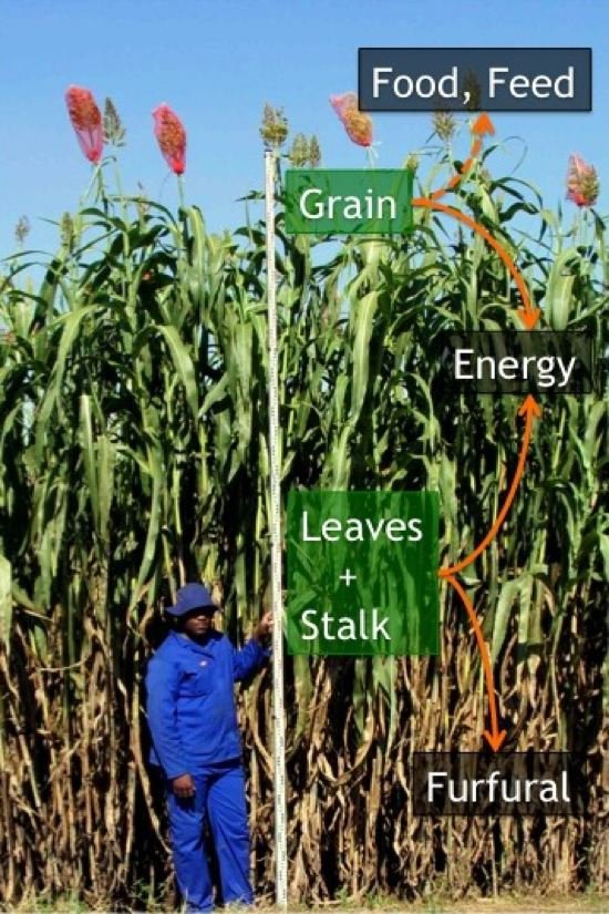 sweetsorghum-products