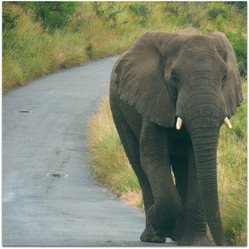 elephantpotholes