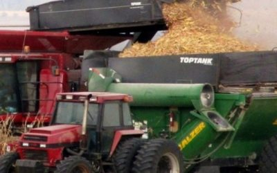 Does the co-harvesting of maize and cobs make business sense?