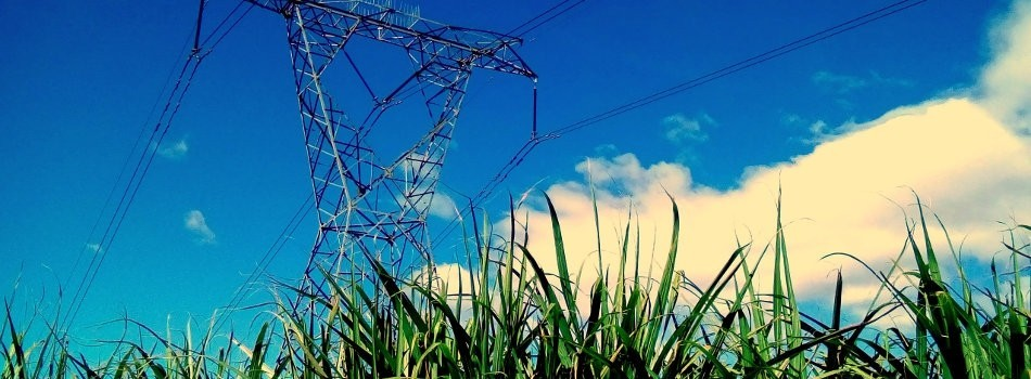 "Beyond ""Electricity From Sugarcane"""