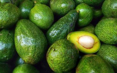 Avocado Furan: Natural Insecticide