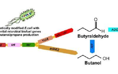 Beautiful Biotechnology for Biofuels