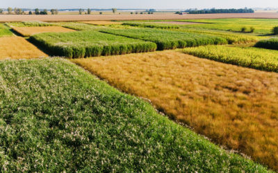 Bioenergy crops could store more carbon in soil