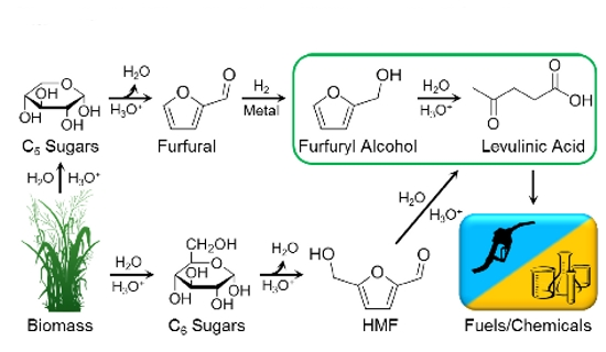 Levulinic Acid from Furfuryl Alcohol in THF Solvent Systems